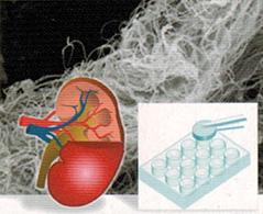 生体適合材料担持ナノファイバーの開発
